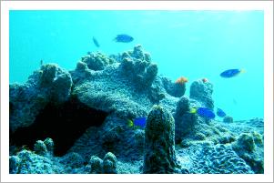 高島の珊瑚礁