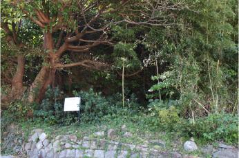 尾浜坑 坑口跡