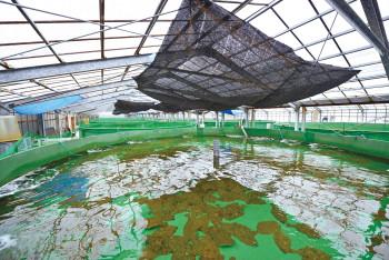 長崎高島水産センター